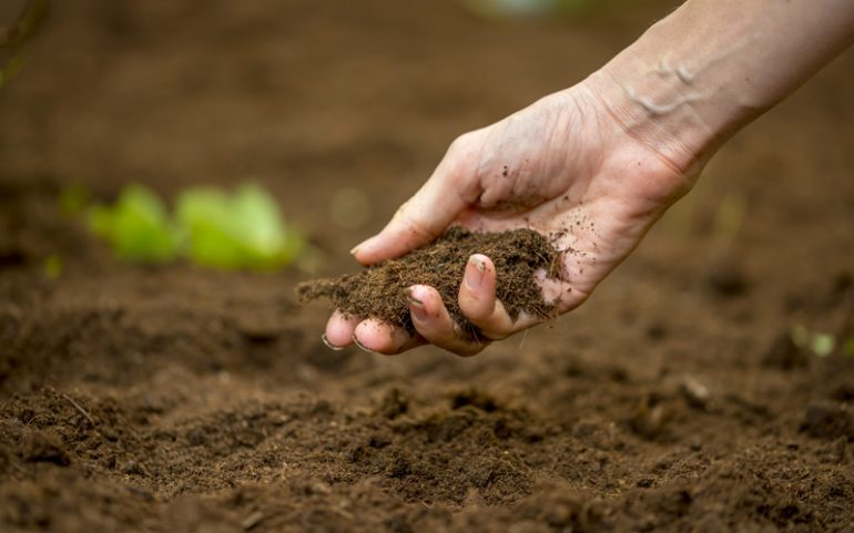 How-to-Improve-Soil-Fertility-Naturally-770x481