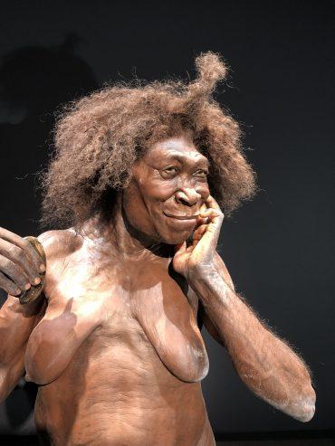3024px-Naturalis-Homo-Erectus-Dubois