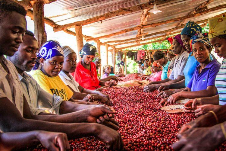 Rwanda-coffe-1024x682