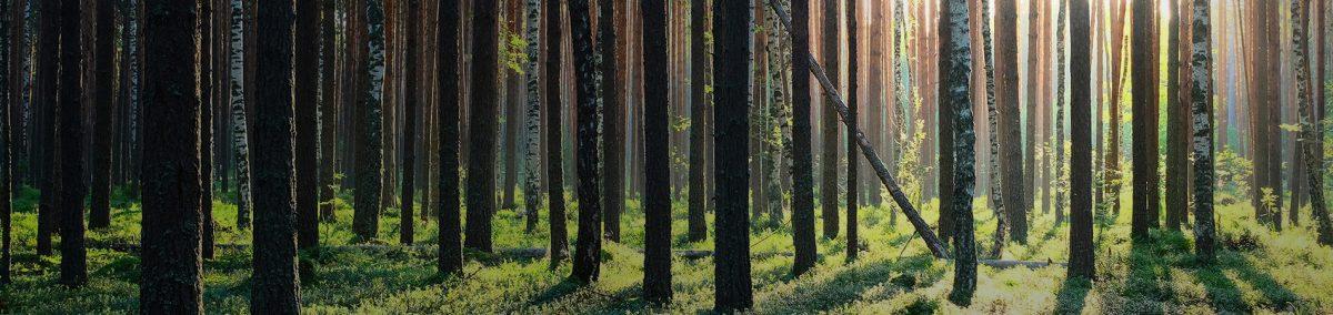 iggesundforest-topbild_1900x450px-02