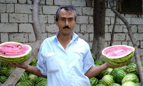 Farmer navigates tricky watermelon market in azerbaijan